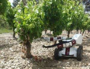 Grape Picking Robot
